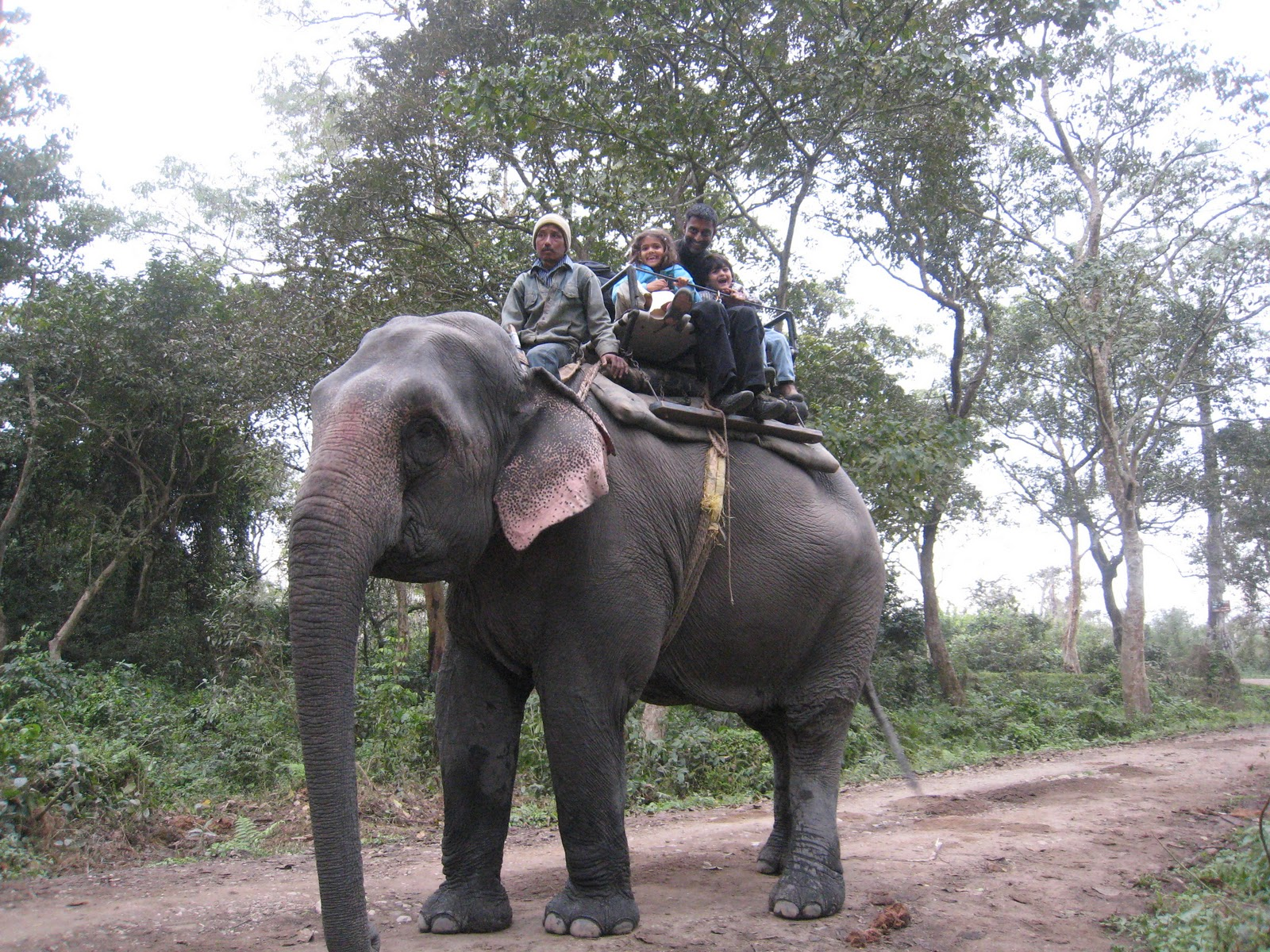 Indian Wildlife Tour - Wildlife Safari in India